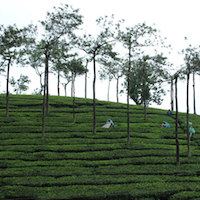 Into the Dravidian Heartland